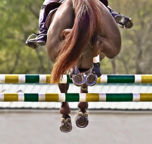 Equine and Equestrian Horse Pony Stables