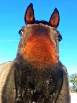 Epona Equine Contact Us